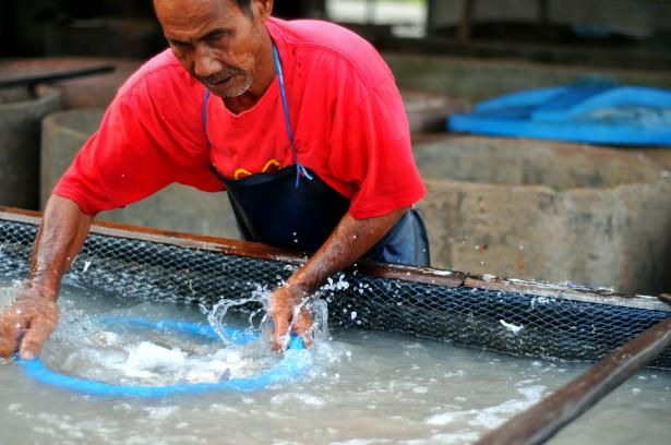 Ikan Kering 8